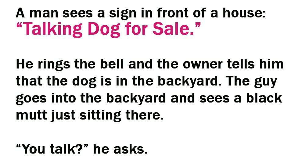 Talking Dog for Sale